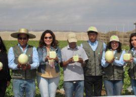 Innovador alimento gourmet de exportación: Melones cuadrados