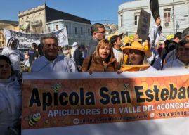 Productores apícolas piden mayor participación en discusión de proyecto de ley