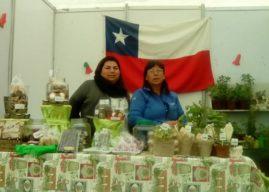En Coquimbo producen té orgánico en base a frutas y hierbas