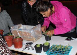 En Antofagasta realizan Talleres de Huertos Urbanos y Arborización para la comunidad