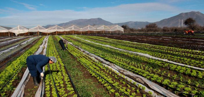 Cámara de Diputados: Comisión de Agricultura despacha informe en contra del TPP