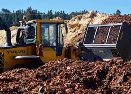 Creciente desarrollo de la industria de Biomasa: la energía renovable que nace de los bosques