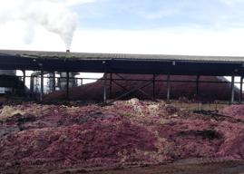 Región del Maule: Autoridad ambiental Instruye medidas provisionales por malos olores en Teno