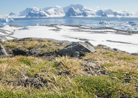[Investigación Científica] La vida microscópica de la Antártica