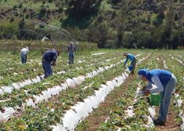 Región de Coquimbo: Cooperativas agrícolas reciben asesoría técnica de estudiantes de INACAP