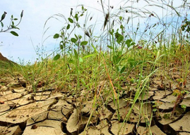 Región de O'Higgins: Gobernador Regional y servicios del Agro acuerdan trabajo conjunto para enfrentar problemas de la Agricultura